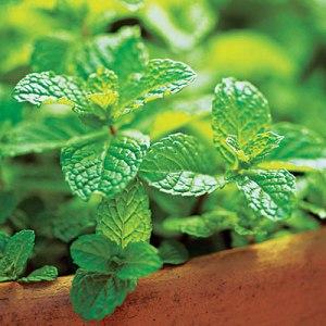 mint-planter-0410-l