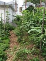 Bronx Edible Garden