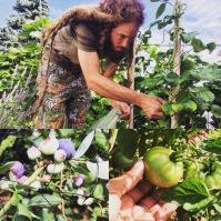 Harvesting Organic Fruits & Veggies