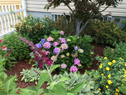Buddleia (Butterfly Bush), Lamb's Ear, Hydrangea, Red Maple, and more...