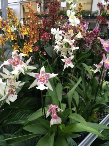 Orchids, Various